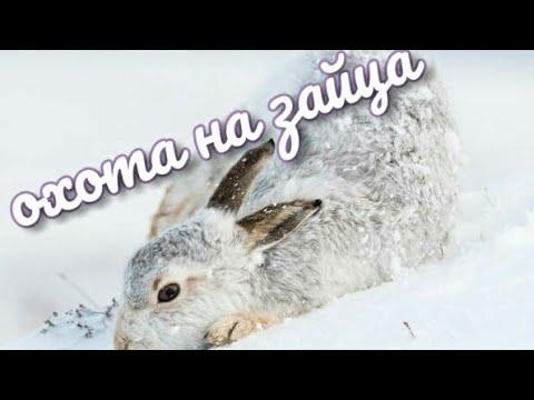 Охота на зайца по первому снегу и не только