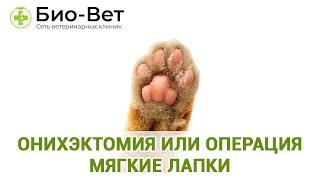Онихэктомия или операция Мягкие лапки. Ветеринарная клиника БИО-ВЕТ.