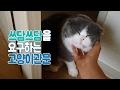 아침에 통과해야 할 몇가지 고양이 관문 How cute! cat gateway~