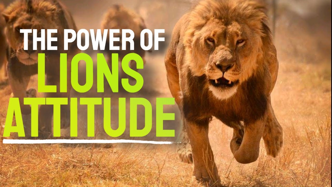 Download The Power Of Lions Attitude - A Powerful Motivational Speech By Dr. Myles