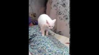 Кошка лечит 2)))