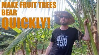 The Trick to Make Fruit Trees Bear Quickly