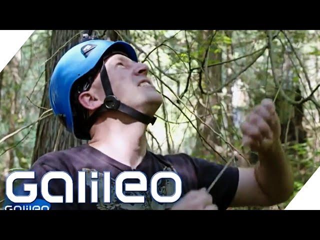 Lebensretter in 100 Metern Höhe - Welchen Beruf suchen wir? | Galileo | ProSieben