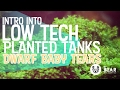 Low Tech Planted Tanks - Dwarf Baby Tears Carpet - No C02
