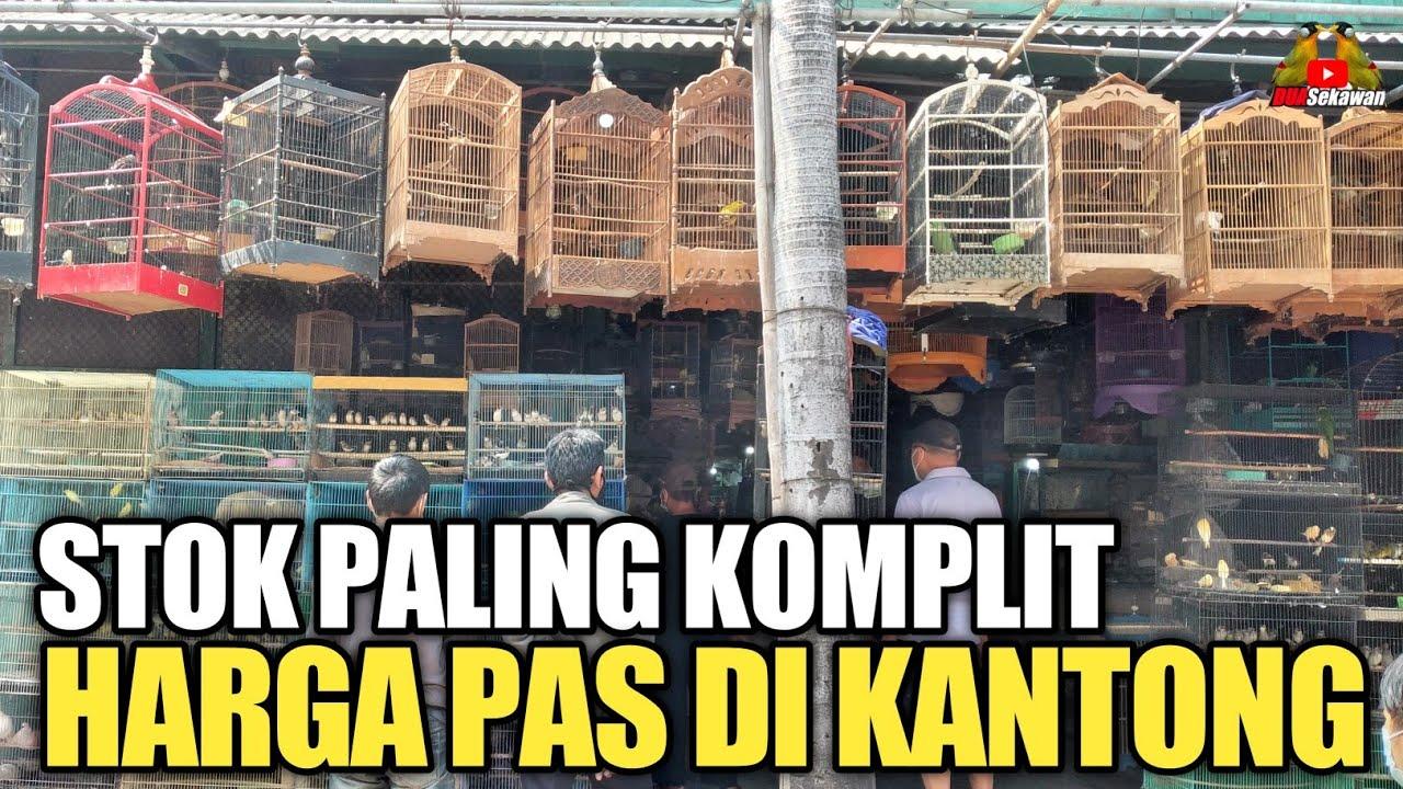 TERNYATA ! PALING KOMPLIT STOK BURUNG DI PASAR BURUNG PRAMUKA KIOS BERKAT JAYA
