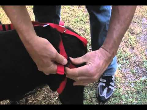 Silver Tails Bottoms Up Harness For Senior Dogs A Petco Product