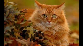 Беременный кот!