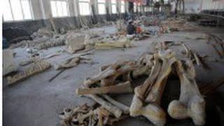 世界初!中国で羽毛がある大型のドロマエオサウルス科恐竜の化石を発見―英科学誌