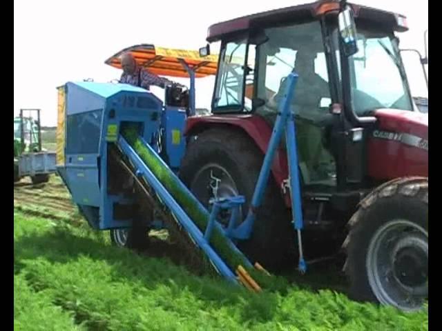 EUROPA CF300 carrot harvester