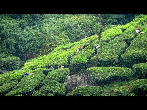 Munnar – mist wreathed hills and meadows