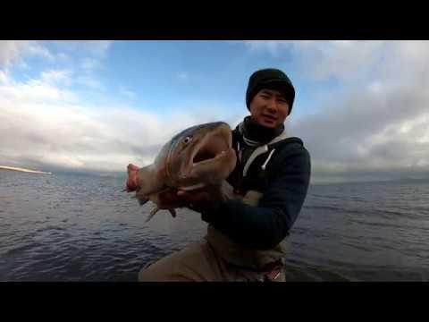 Trip Highlight: Pyramid Lake 12-11-18
