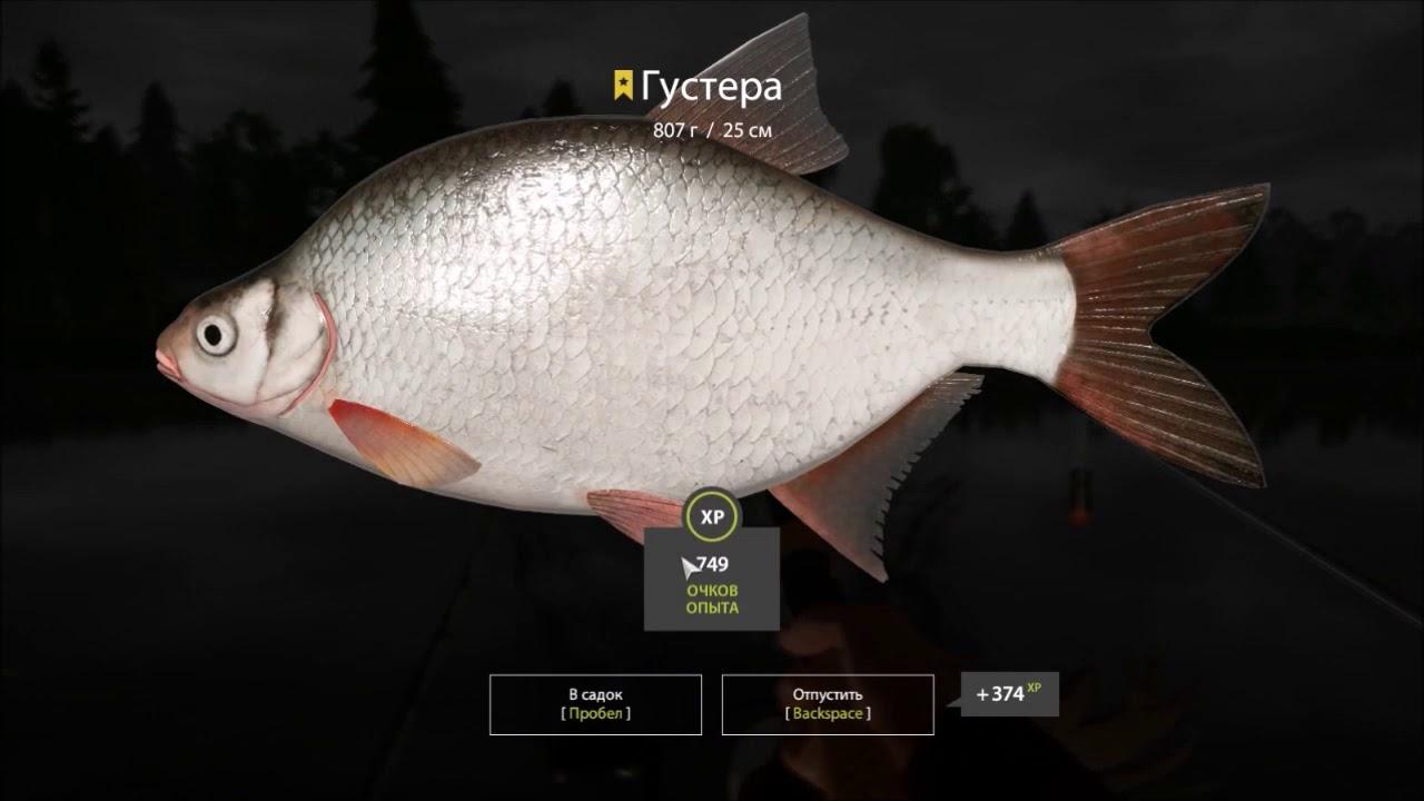 русская рыбалка 3 озеро зачетная