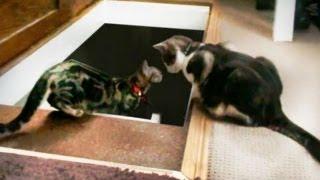 階段の下をのぞき込むネコちゃん、それを見て隣からもう一匹がイタズラしちゃう!?