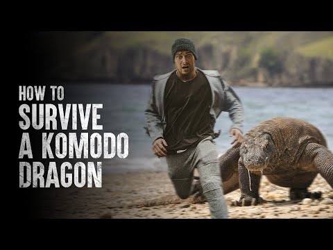 How To Survive a Komodo Dragon Attack