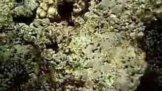 Anenome fish Thumbnail
