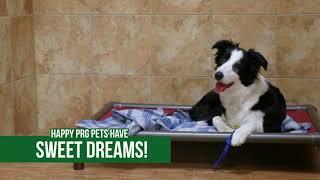 pet boarding dog daycare in arlington tx