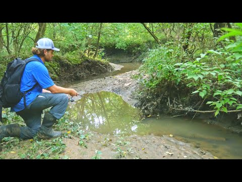 Fishing in a TINY CREEK!?