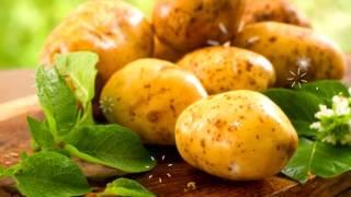 КАРТОФЕЛЬ ВРЕД И ПОЛЬЗА | вред картофельного крахмала, вред картофеля, полезен ли картофель,