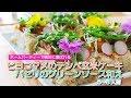 オーガニック料理・ひよこ豆のテンペ玄米ケーキ~春のレシピ