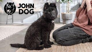 Jak oduczyć szczeniaka podgryzania dłoni  - John Dog