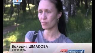 Миасец нападает на женщин с собаками в районе карьера машгородка