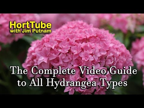 The Complete Video Guide to Most Hydrangea Types