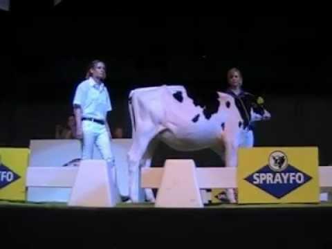 Holstein Master Sale Nr. 18