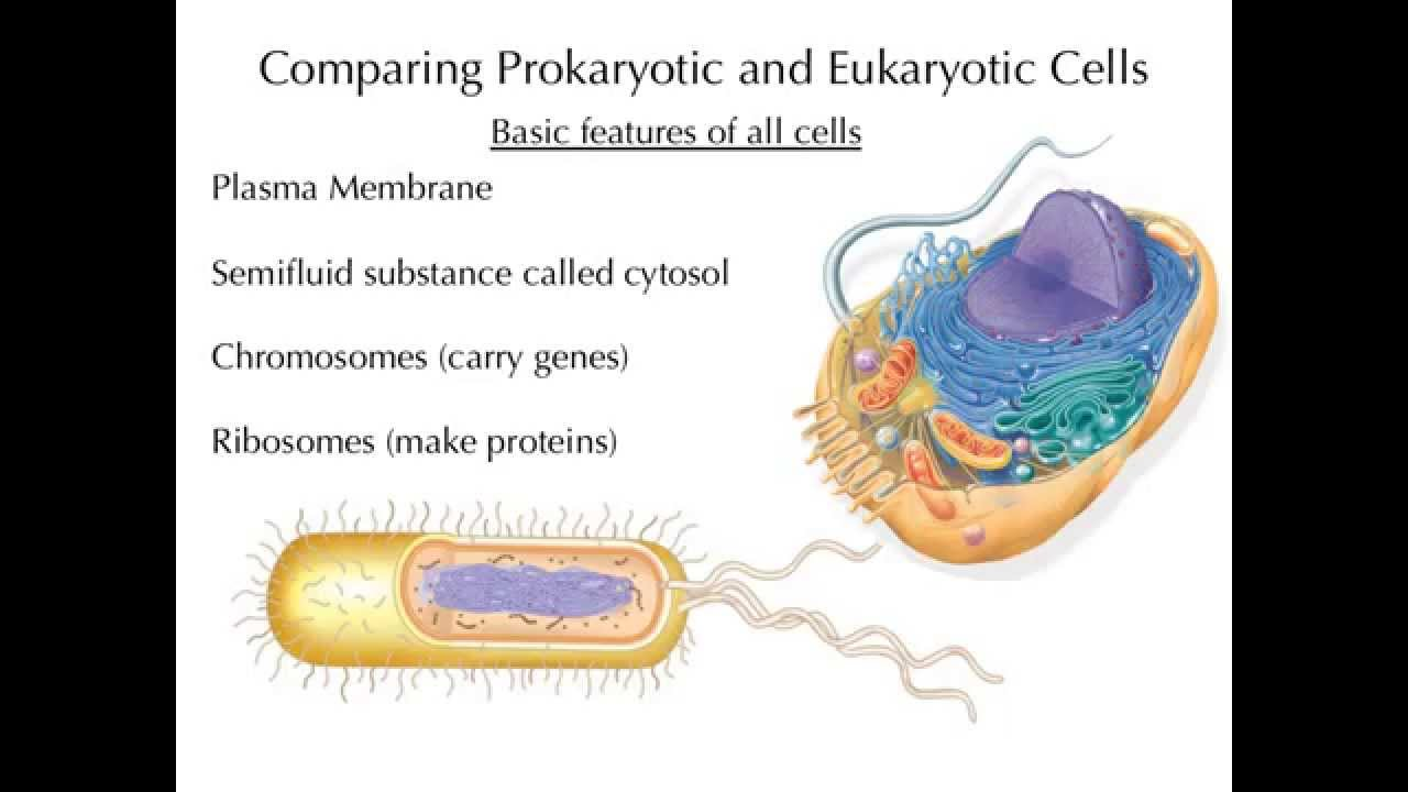 prokaryotic and eukaryotic cells The basic and smallest unit of life is a cell this article gives information about the differences between prokaryotic and eukaryotic cells.