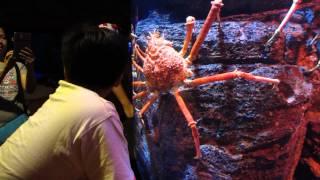 Bangkok Sea Life Ocean World Alaska King Crab