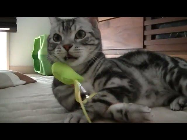 【猫記録297】動物の不思議 地震7秒前に気づき即避難する防災意識の高い猫-Cats to evacuate