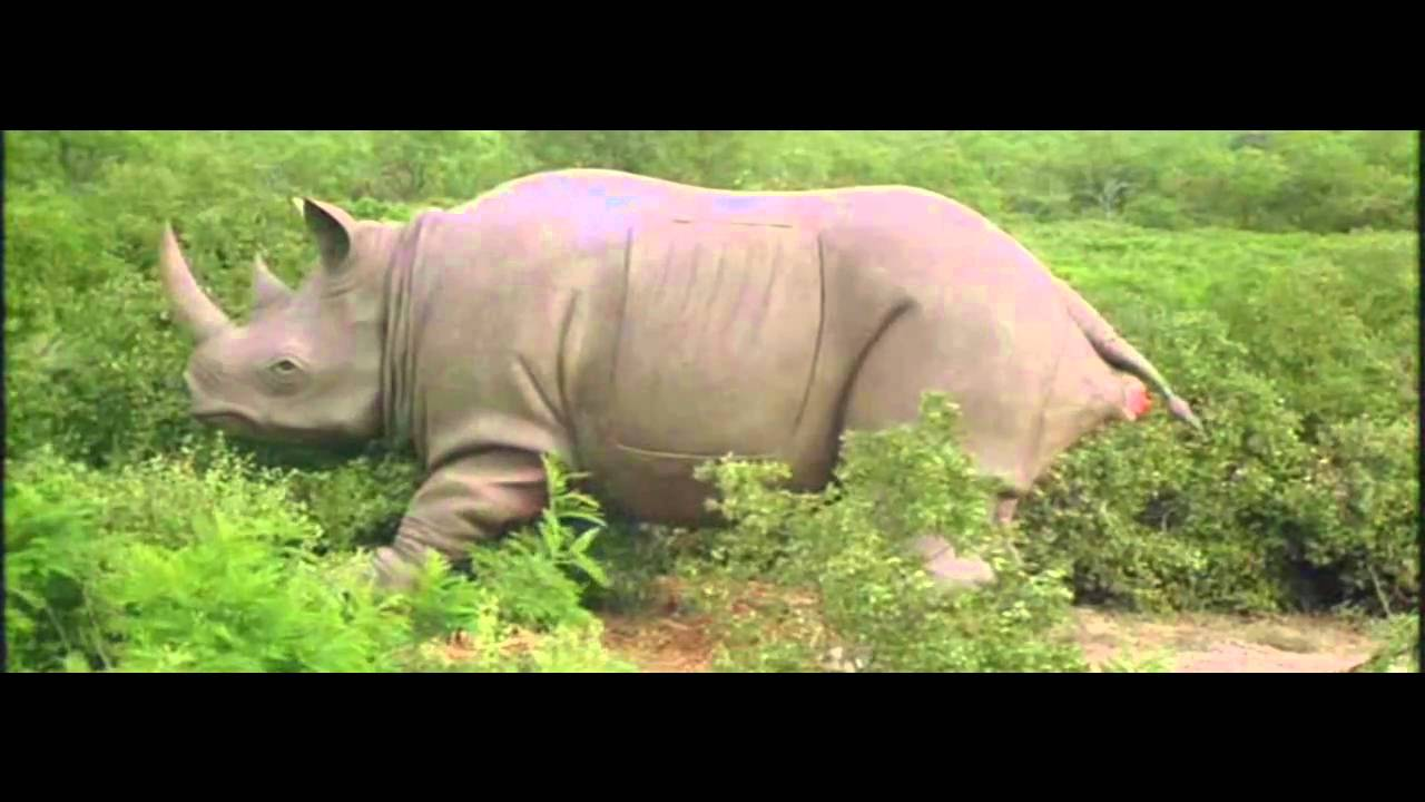 ace ventura 2 rhino birth scene youtube