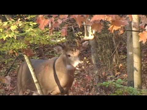 Deer Quest Advertisement