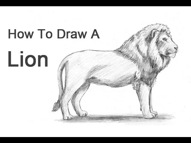 How To Draw A Lion Youtube Sketch lion with pencil through our step by step tutorial or watching video tutorial, quickly learn pencil drawing of lion. how to draw a lion