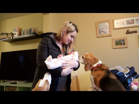 Newborn Baby Meets Her Dogs for a First Time | Best Reaction