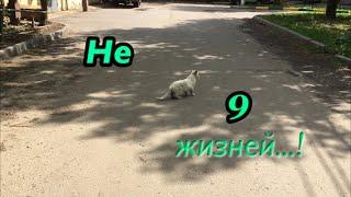 Кошачий АД на земле!/Идём со мной...