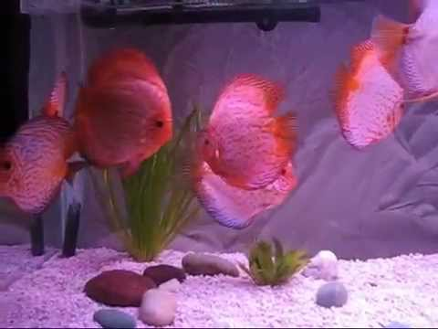 fish hungry оптом