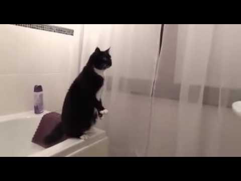Кот увидел себя в зеркало