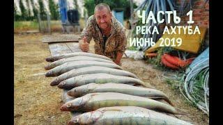 Это лучшая рыбалка! Июнь - река Ахтуба, база ЛЕВАДА, ЛОВЛЯ ТРОФЕЙНОГО СУДАКА.!