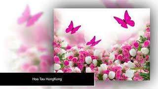 Hoa Tau HongKong Thap Nien 80