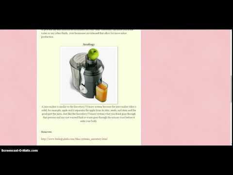 Body Systems analogies