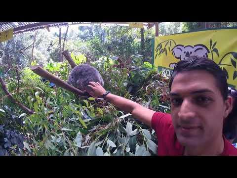 Koala Park Sanctuary (Sydney) NSW