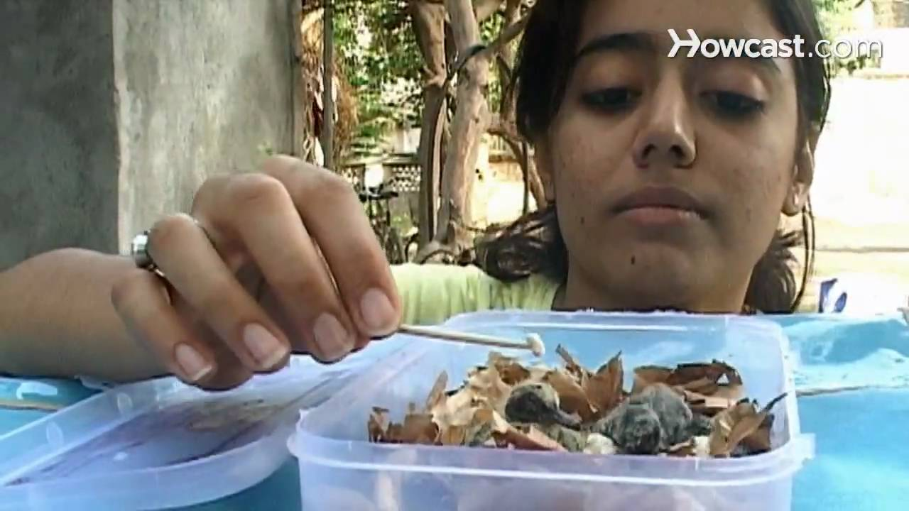 How to Feed a Baby Bird - YouTube