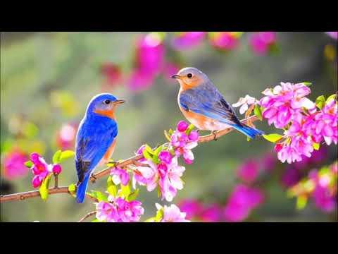 Spring Birds Ringtone | Free Ringtones Downloads