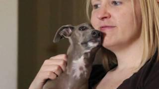 Why I Love Italian Greyhounds II