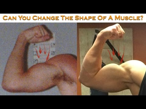 Can You Change The Shape Of A Muscle Or Is It Genetic?