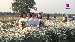 vườn cúc họa mi tại Nam Định