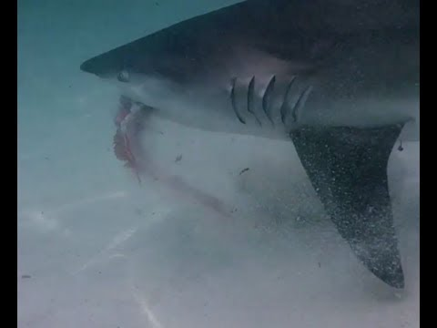 WATCH: Guy Survived A Shark Attack While Snorkeling