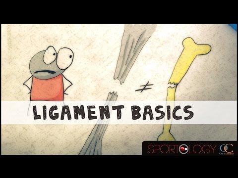 ligament-basics---science-explained