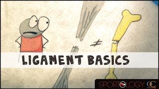 Ligament Basics - Science Explained