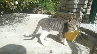 #kedi#hayvan#hikaye#hayvanlar alemi#Bonçuk büyüyor bonçuk ve annesinin hikayeleri vlog 2